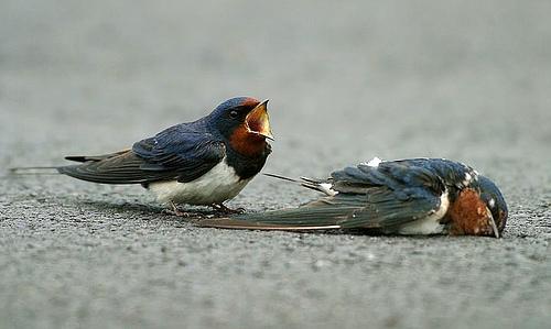Crying_bird