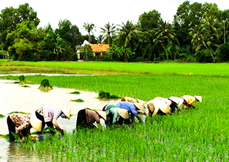 Planting_rice_Mekong