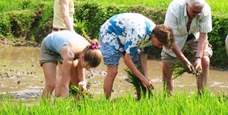 Tourists_planting_rice
